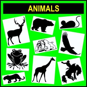 Animals - All